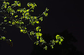 Nature by Streetlight