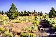 Artie on the Badlands Rock Trail in the Oregon Badlands Wilderness