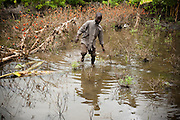 Irene Sossou, 29, walks through his destroyed tomato plot near his home in the village of Agniwedji, Benin  on Monday October 25, 2010.