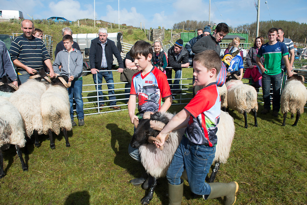 Clare Island Ram Fair &amp; Sheep Dog Trials.<br /> Cousins Michael O'Malley Clare Island and Thomas O'Toole from louisburgh with their hogget blackface Ram who won third place. Pic: Michael Mc Laughlin