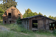 The Louis Larson Barn and milking parlour at Burgoyne Bay. The cow barn and milking parlour were built in the 1930's and used on the Larson farm through the early 1960's. Photographed in Burgoyne Bay Provincial Park on Salt Spring Island, British Columbia, Canada.
