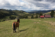 A horse looks down towards a traditional Polish shepherds' mountain hut, on 20th September 2019, Biala Woda, Jaworki, near Szczawnica, Malopolska, Poland.