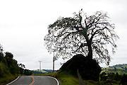 Munhoz_MG, Brasil...Rodovia em Munhoz...The highway in Munhoz...Foto: LEO DRUMOND / NITRO....