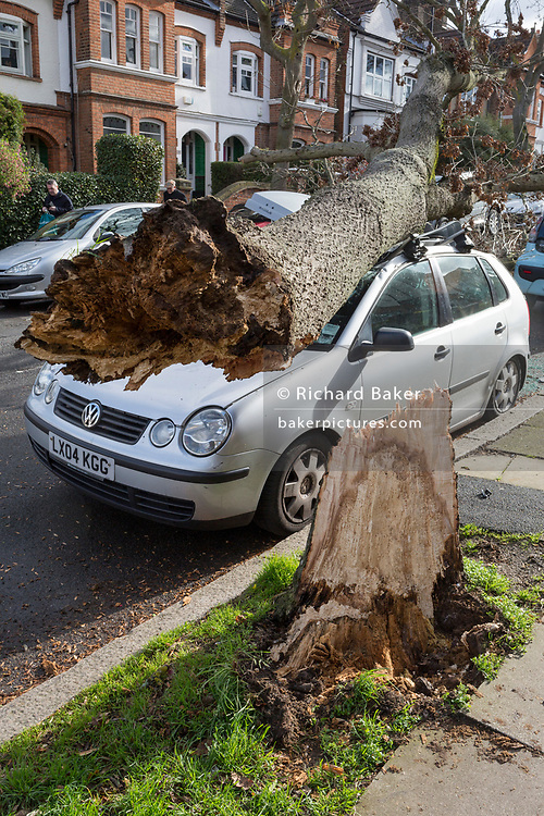 Following strong gusts of winds in south London, a car has been crushed beneath the trunk of a tree on Poplar Road, Herne Hill SE24 - the responsibility of Lambeth council, on 10th March 2019, in London, England.