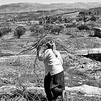 A woman collects sticks in front of the Syrian border in the town of Hacipasa, Turkey, Sunday, March 18, 2012. The number of Syrian refugees in Turkey is now about 17,000. March 2012.
