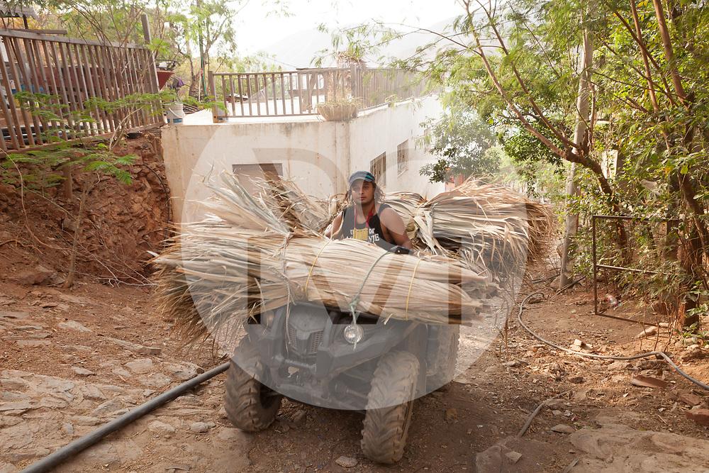 KOLUMBIEN - TAGANGA - Ein Bauarbeiter transportiert Palmblätter mit einem Vierradmotorrad zu einer Baustelle - 24. April 2014 © Raphael Hünerfauth - http://huenerfauth.ch