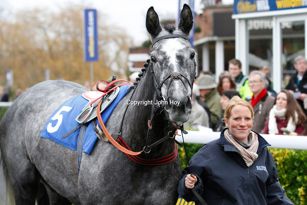 Kentford Grey Lady parading before the 2.05