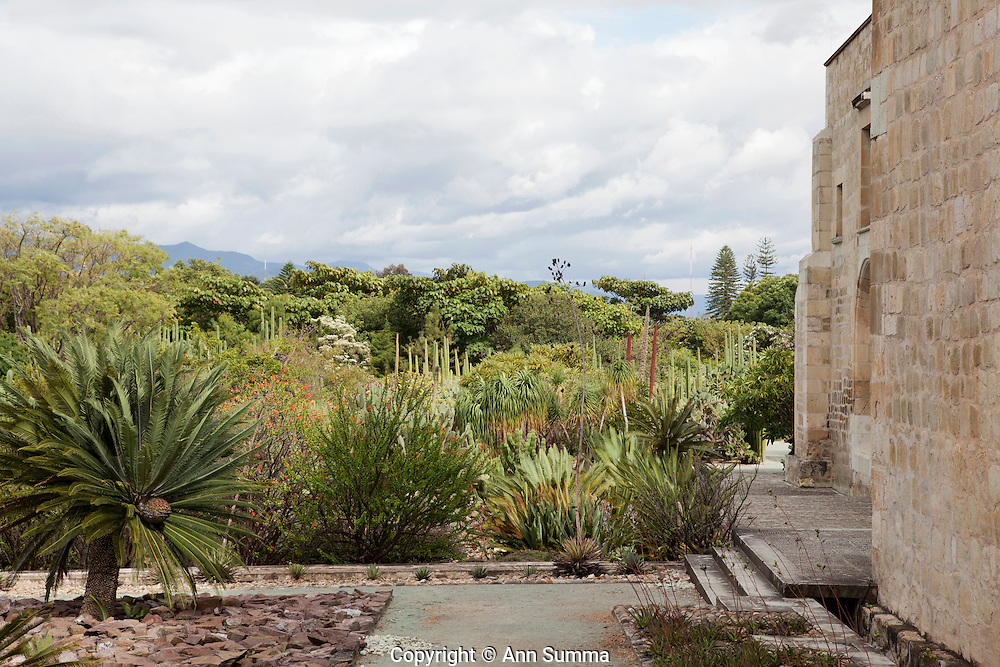 Oaxaca, Oaxaca: views of the Santo Domingo Church from the grounds of the Jardin Ethnobotanico. (Photo: Ann Summa).