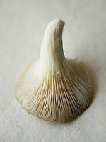 mushroom upside-down