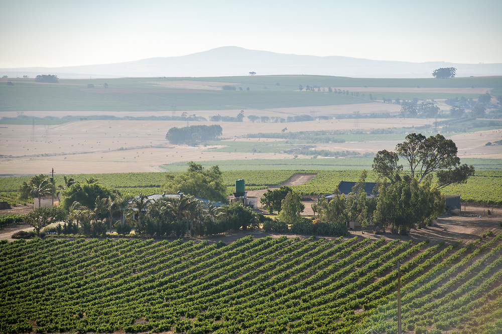 Overview of the vast rural landscape of a vineyard and resturant located in the slopes of Paarl Mountains, Cape Town, South Africa