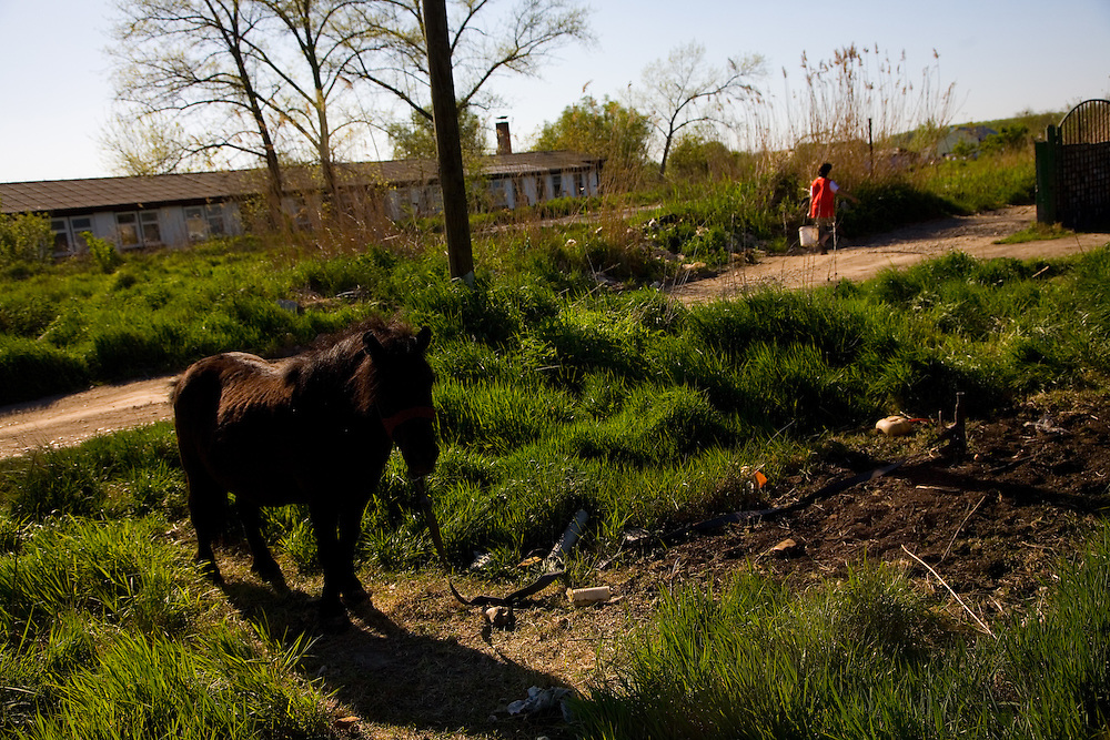Scenes from Pecevo (Pechevo), Serbia. An industrial/rural suburb of Belgrade..A horse tied up outside a Roma encampment.