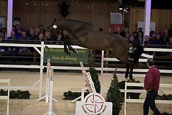 018 - Orleans van de Kruishoeve <br /> VRIJSPRINGEN<br /> Hengsten keuring BWP - Koningshooikt 2017<br /> © Dirk Caremans<br /> 27/12/2016