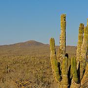Sierra de La Laguna, Baja California, Mexico, North America