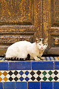 Cat sleeps on Moroccan mosaic tiled steps, Bahia Palace, Marrakesh, Morocco, 2016–04-21.