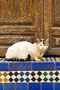 Cat sleeps on Moroccan mosaic tiled steps, Bahia Palace, Marrakesh, Morocco, 2016–04-21.