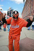 A super fan of the Baltimore Orioles poses for a picture during opening day Oriole Park at Camden Yards on Friday, April 9, 2010.