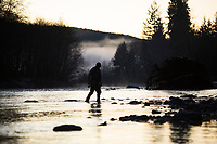 Fly fishing for steelhead along the Bogachiel River Olympic Peninsula, WA.