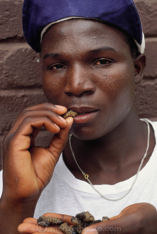 "A teen-age boy snacking on dried, salted mopane worms near Lanseria, South Africa. Eaten dry the worms are hard, crispy, and woody tasting. The worms are so popular in South Africa that they have been over-harvested and are now only abundant in neighboring Botswana. ""Mopane"" refers to the mopane tree, which the caterpillar eats. Dried mopane worms have three times the protein content of beef and can be stored for many months. Image from the book project Man Eating Bugs: The Art and Science of Eating Insects."