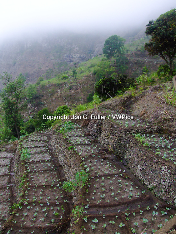 New seedlings in a stone  terraced vegetable garden in the Paul Valley, Santo Antao, Republic of Cabo Verde, Africa.