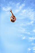 red bull cliff diving - 8.25.12