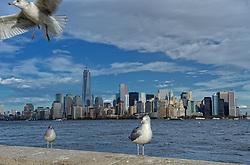 01-01-2013 ALGEMEEN: BVDGF NY MARATHON: NEW YORK <br /> Opweg naar de south Ferry's voor een bezoek aan Ellis Island en Liberty Island is een klein onbewoond eiland in de Haven van New York en New Jersey gelegen in de monding van de Hudson River. Op het eiland staat het wereldberoemde Vrijheidsbeeld / NY item around skyline manhattan<br /> ©2013-WWW.FOTOHOOGENDOORN.NL