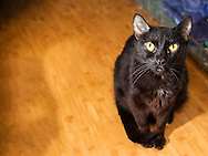 Rudy is a 5 year old spayed DSH cat.  She was surrendered because her family could not afford to take care of her.