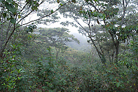 Coffee drying in the Maya Vinic community Yaxgemel in Chiapas, Mexico February 2009