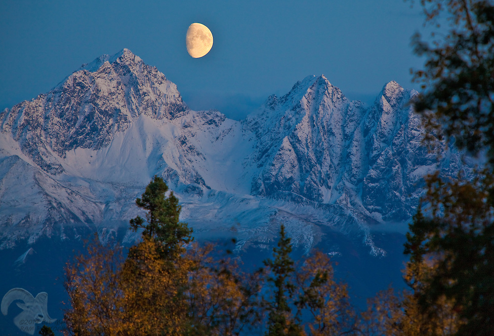 The waxing moon rises over Twin Peaks near Palmer, Alaska as sunset fades on the mountain and surrounding birch,aspen and spruce trees.