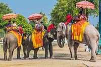 Bangkok, Thailand - December 29, 2013: tourists riding elephants at Ayutthaya in Bangkok, Thailand on december 29th, 2013