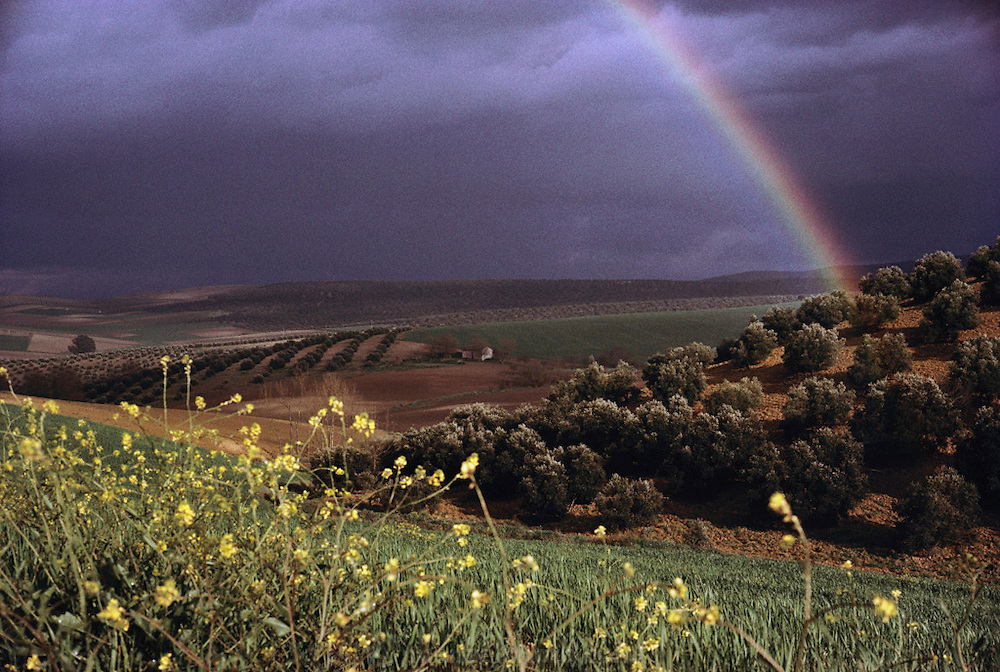 Rainbow over olive orchards near Cordoba, Spain.