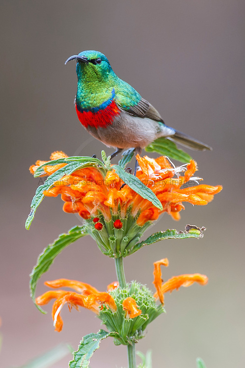 Kirstenbosch Botanical Gardens, Cape Town, Western Cape, South Africa
