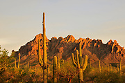 Sonoran Desert, Ironwood Forest National Monument, Eloy, Arizona, USA.