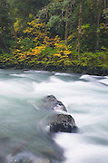 Autumn along the North Fork Nooksack River, North Cascades Washington