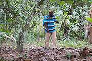 Freddy Akuffo spraying his Cocoa trees to help keep harmful parasites at bay...Freddy Akuffo has been a cocoa farmer since 1969 when he inherited his farm from his father. Since he received his training, as part of the Kraft Cocoa Partnership, Freddy has seen his yield increase from 180 bags of cocoa a year to 220.