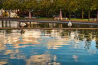 Seagulls @ Downtown Park