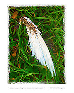 bird feather in the grass