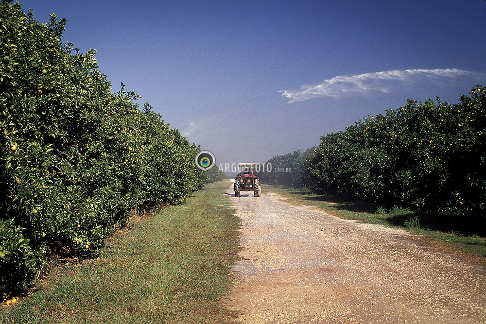 Plantacao de Laranja no estado de Sao Paulo./ Orange plantation in the state of Sao Paulo. Sao Paulo, Brasil - 1994