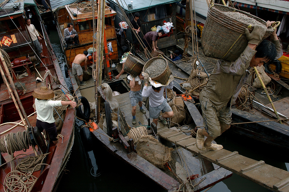 Fishermen carry baskets of their morning catch manually up planks from the moored fishing vessels in Zhuhai harbour.