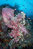 Sponges and Soft Corals thrive on a reef slope<br /> <br /> Shot in Indonesia