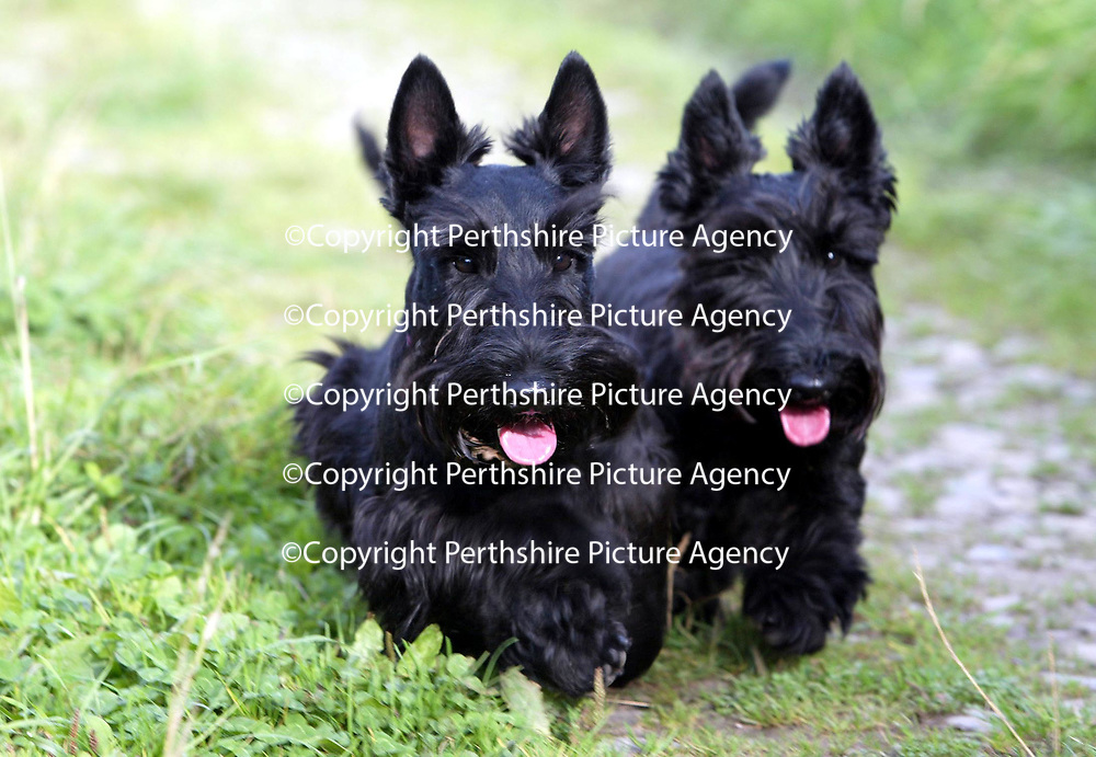 Angus and Cassie pictured 17.09.02<br /> <br /> Pic by Graeme Hart<br /> Copyright Perthshire Picture Agency<br /> Tel: 01738 623350 / 07990 594431