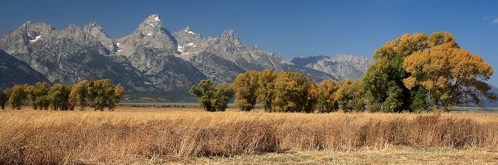 A line of trees form a wind break near a Mormon homestead in the Grand Tetons National Park