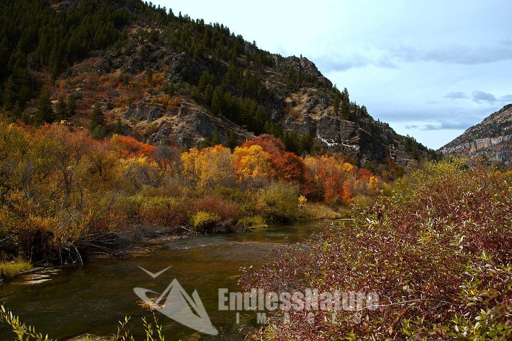 Fall colors in Utah along the Blacksmith River in Blacksmith Fork Canyon.