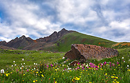 A picture of Matterhorn Peak behind a beautiful set of Colorado wildflowers.