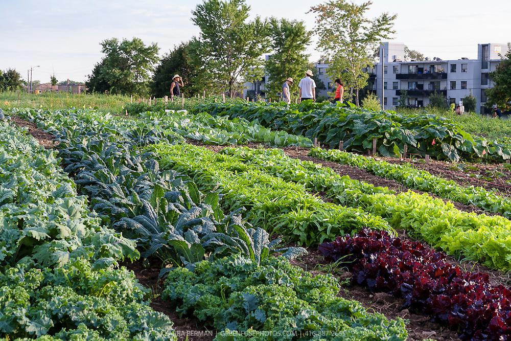 Urban Farming Greenfuse Photos Garden Farm Amp Food
