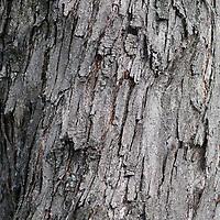 Inventaire, arbres
