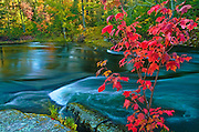 Red maple in autumn color at Dryberry Creek<br /> Sioux Narrows<br /> Ontario<br /> Canada