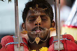 © Licensed to London News Pictures. 24/01/2016 Ipoh, Malaysia. A devotee with metals sticks pieced through his mouth arrives at Kallumalai Murugan Temple in Ipoh, Malaysia, during the Thaipusam Festival, Sunday, Jan. 24, 2016. Photo credit : Sang Tan/LNP