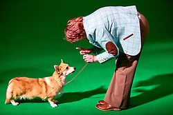 © Licensed to London News Pictures. 08/03/2018. Birmingham, UK.  Crufts dog show in the NEC. In this picture: Elessar Angels Design, a Welsh Corgi (Pembroke) in a showring.  Photo credit: Cliff Hide/LNP