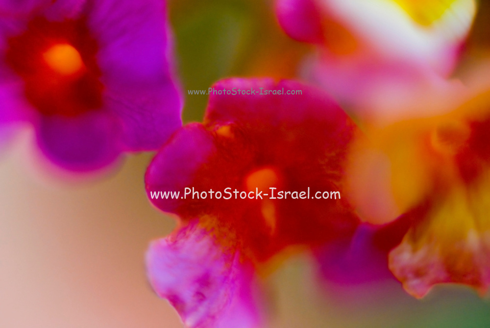 defocused Abstract flower close up