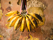 07 JUNE 2014 - YANGON, MYANMAR: Bananas ripen on a wall in the Pegu Club. The Pegu Club in Yangon was the Officers' Club for the British Army when Myanmar was the British colony of Burma. The club, principally made of teak, is now abandoned and in decay. Squaters have moved into the parts of the complex still standing. Yangon has the highest concentration of colonial style buildings still standing in Asia. Efforts are being made to preserve the buildings but many are in poor condition and not salvageable.    PHOTO BY JACK KURTZ